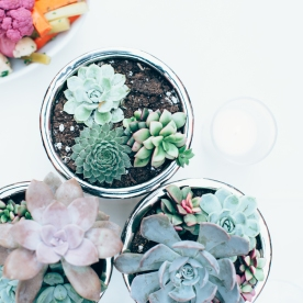 Succulents on every table.