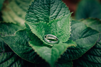 silver-wedding-band-in-leaves