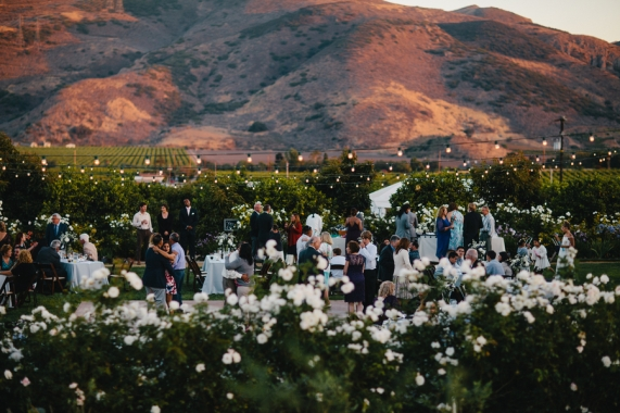 wedding-reception-in-vineyard