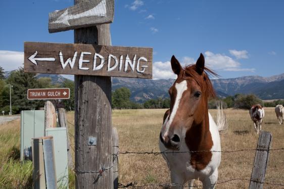 wedding-sign-next-to-horse