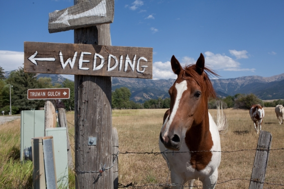 wedding-sign-next-to-horse